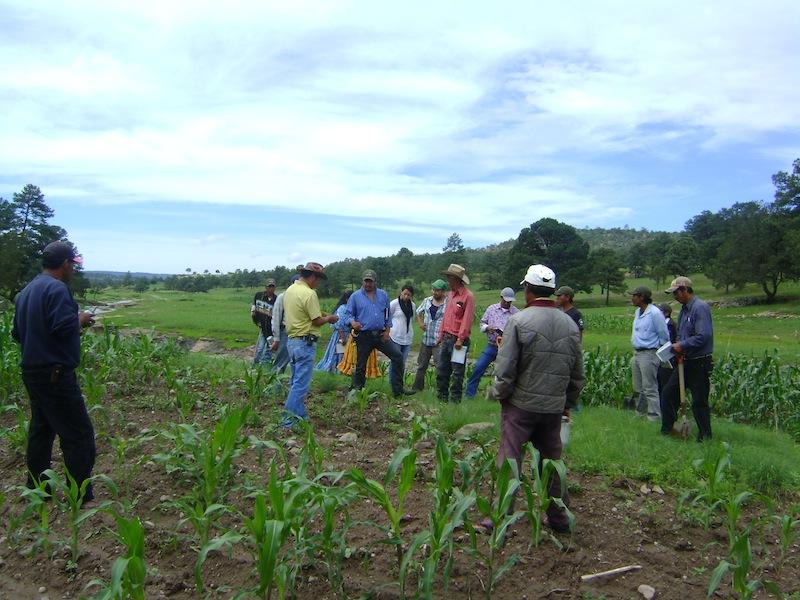 Galería de Agricultura y nutrición 2013