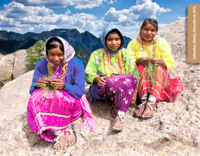 Informe: Derechos Territoriales de los Pueblos Índigenas de la Sierra Tarahumara