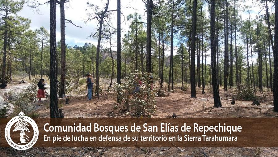 Conteo en la comunidad de Repechique de árboles talados y marcados.